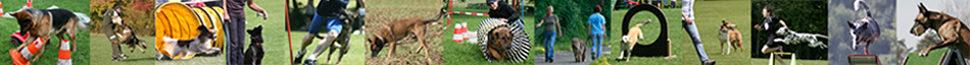 Hundesport in der Kreisgruppe 11